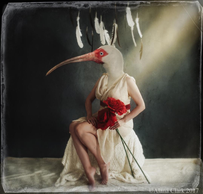 ibiswm